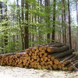 Przekonaj się do drewnianej podłogi